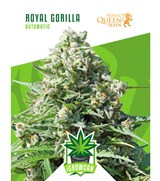 iGrowCan - Royal Gorilla Automatic