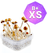 B Plus Kit Coltivazione - XS