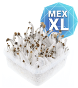Mexican Kit Coltivazione - XL