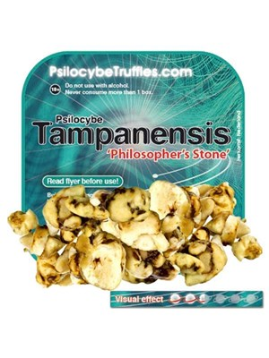 Psilocybe Tampanensis Promotion Pack